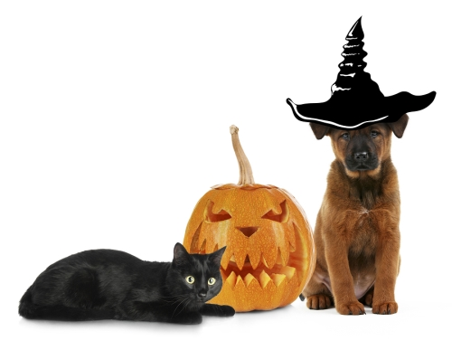 Halloween with Pets in San Jose