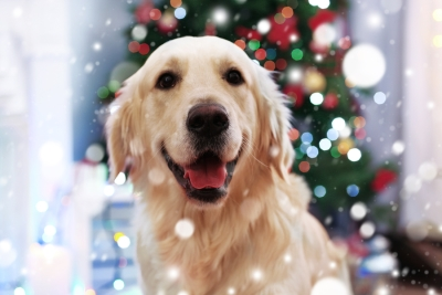 Holidays with Pets in San Jose