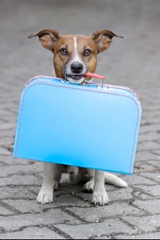 Going on Vacation without Your Pet in San Jose