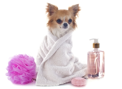 Benifits of Grooming Your Pet in San Jose