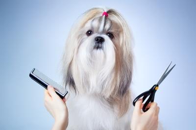 Choosing Dog Groomer in San Jose