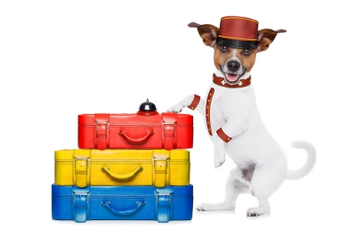 Pet Parent's Guide to Boarding in San Jose