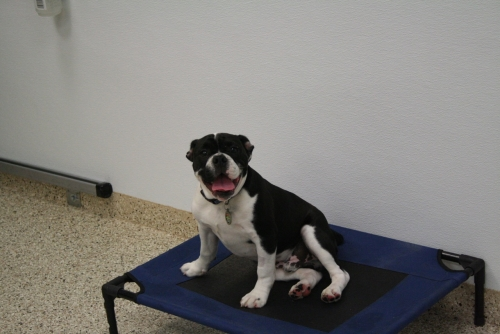 Dr. Dave's Doggy Daycare, Boarding & Grooming's Commitment to Safety