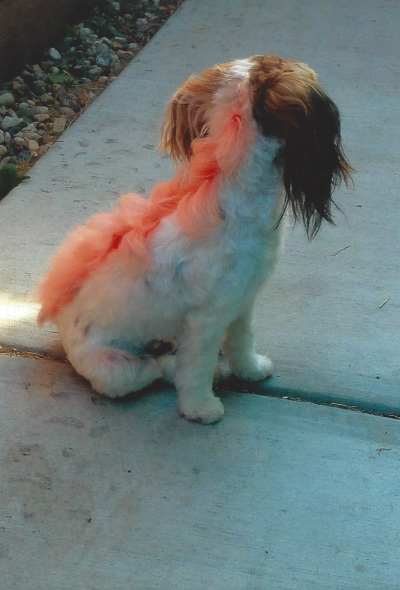 Latest Dog Grooming Trends in San Jose