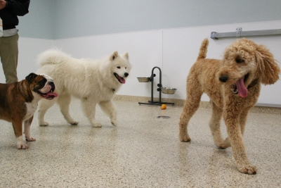 Benefits of Doggy Daycare in San Jose