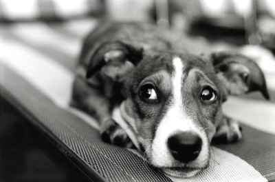 Tips for Pet Boarding Anxiety in San Jose