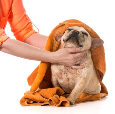 Dog Drying and Grooming in San Jose