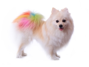 Creative Pet Grooming in San Jose