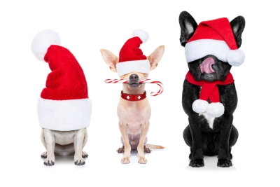 Advice for Boarding your Dog for Holidays in San Jose