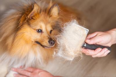 Importance of Grooming your Pet Regularlyin San Jose