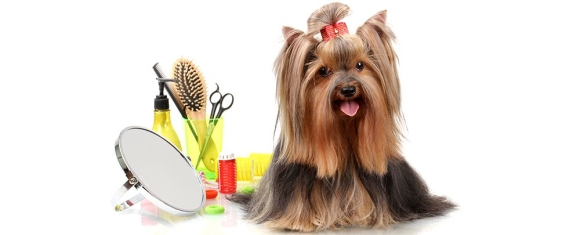 Grooming Services For Your Pet in San Jose