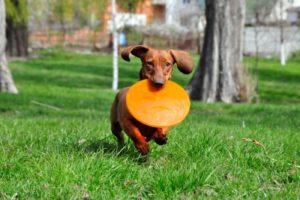 doggy daycare benefits