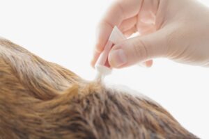 flea and tick removal