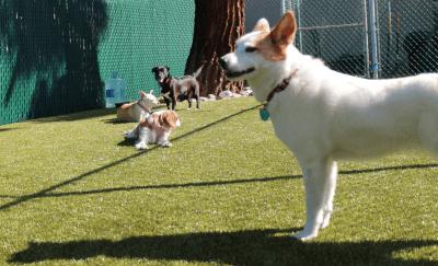 Responsible Pet Owner's Guide in San Jose