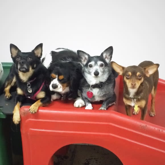 Keep Your Pet Occupied with Doggy Day Care
