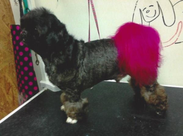 DOG A FASHIONABLE FLAIR WITH CREATIVE GROOMING logo