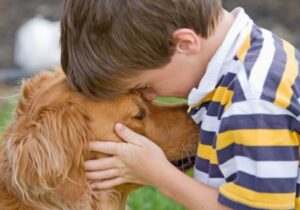 Young boy with brown Golden Retriever